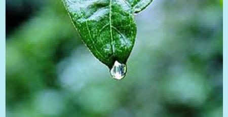 Yağmur sırası camdaki damlanın evrimini düşündünüz mü hiç ya da kapalı musluktan bin bir çabayla kopup yoluna devam isteğini takdir ettiniz mi? Hayatlarımızla ne kadar çok ortak yanı olduğunu fark ettiniz mi?